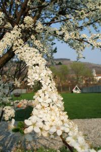 Camping - Spring blossom